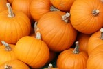 Bake_these_pumpkins_in_Toronto-300x200